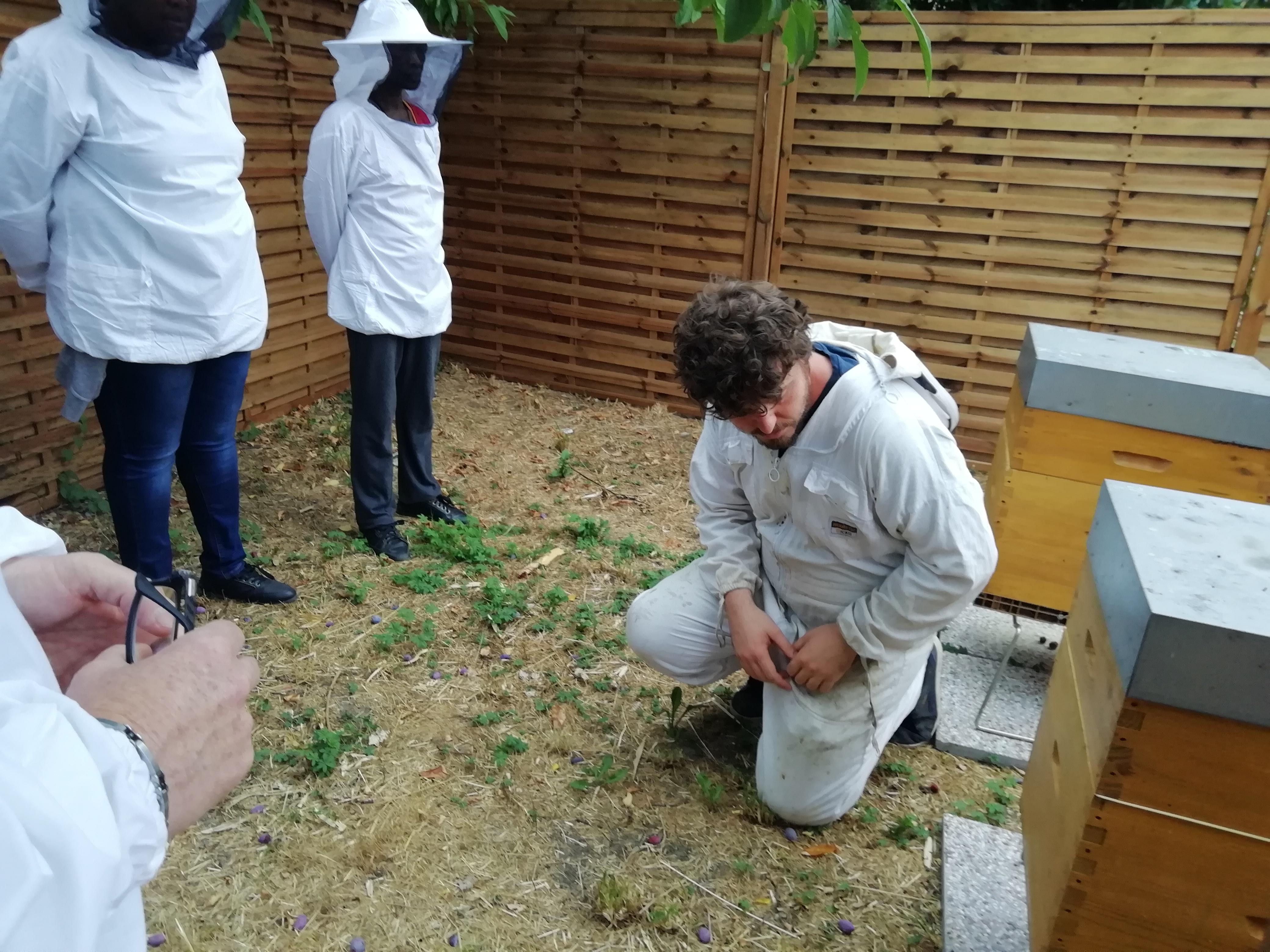 Installation d'un nouveau rucher